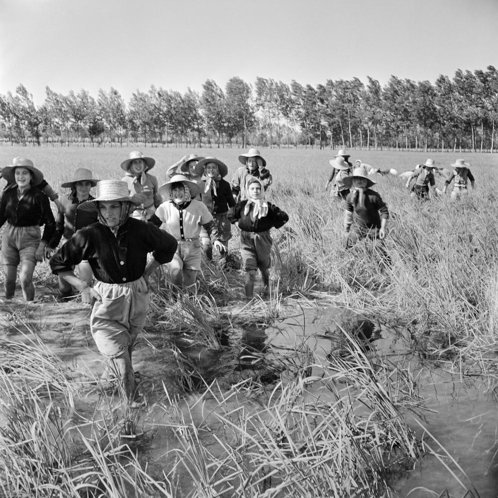 Jacqueline Vodoz. Le mondine escono dai campi di riso, Rosate (MI), 1954