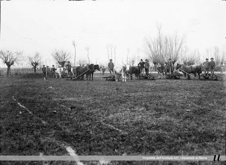 Paul Scheuermeier. Trasporto con slitte trascinate da buoi, Castiglione d'Adda, (LO), 1920