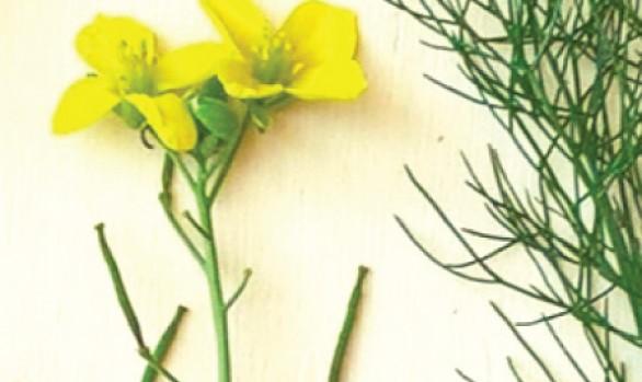 19/12 Giornata di studio a Milano: Ingredienti delle Alpi, raccolta e uso delle piante spontanee